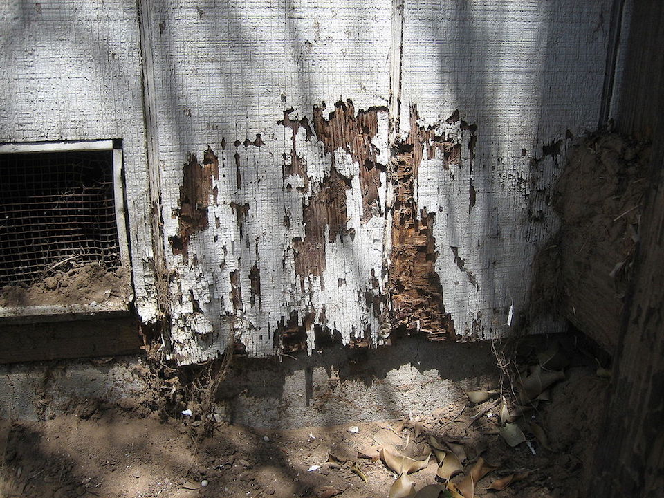 Termite Damage Alabama