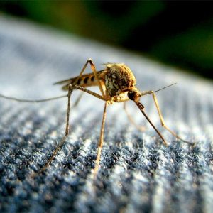 Mosquito Control in Alabama