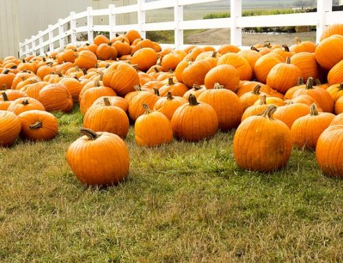 Stink Bugs, Roaches and Pumpkins: Signs of Fall