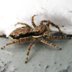 Spider Control Service in Alabama