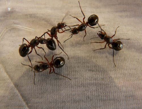 Tips to Keep Ants Out of Your Home