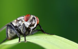 Get Rid of Flies Before They Come Near Your Food