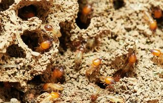 Termite Inspections and Treatment in Springtime