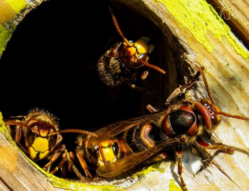 How To Keep Yellow Jackets Out Of Your Yard
