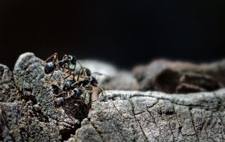 Invading Ants, Dealing With Invading Ants