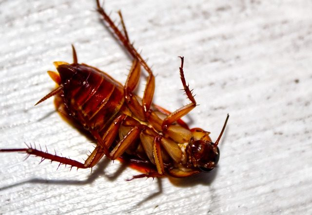 The Crazy Way Cockroaches Are Invading Your House